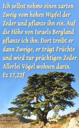 Ezechiel 17